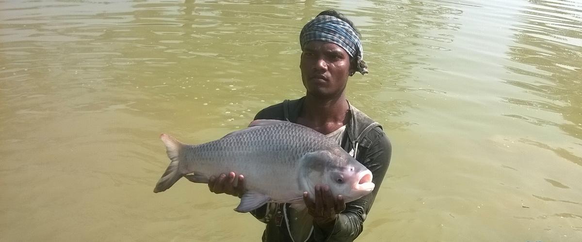 KAILASH FISHERIES AND AQUATICS ::